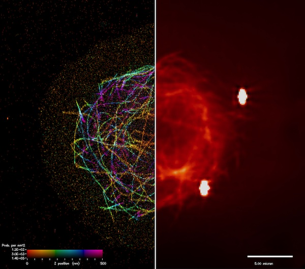 Microtubules, which are essential for cell division and intracellular transport, are shown in a superresolution iPALM image on the left and a standard resolution image on the right. Photo credit: James Galbraith, Gleb Shtengel, Harald Hess, and Catherine Galbraith (Janelia Farm, NIH).