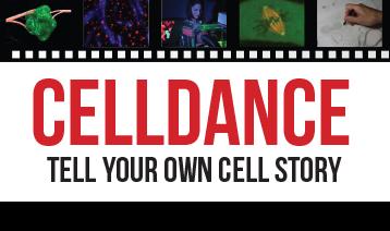 celldancelandingimagecurtains
