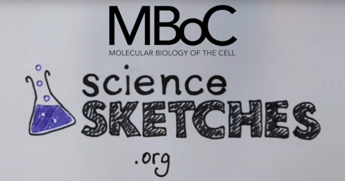 science sketches screen grab